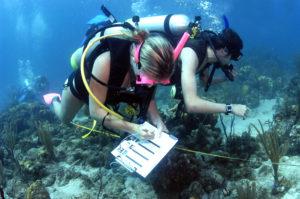 Scientific_diver_1