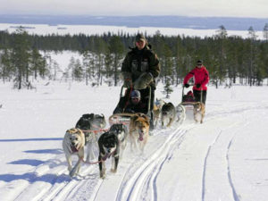 Tromso_husky_1