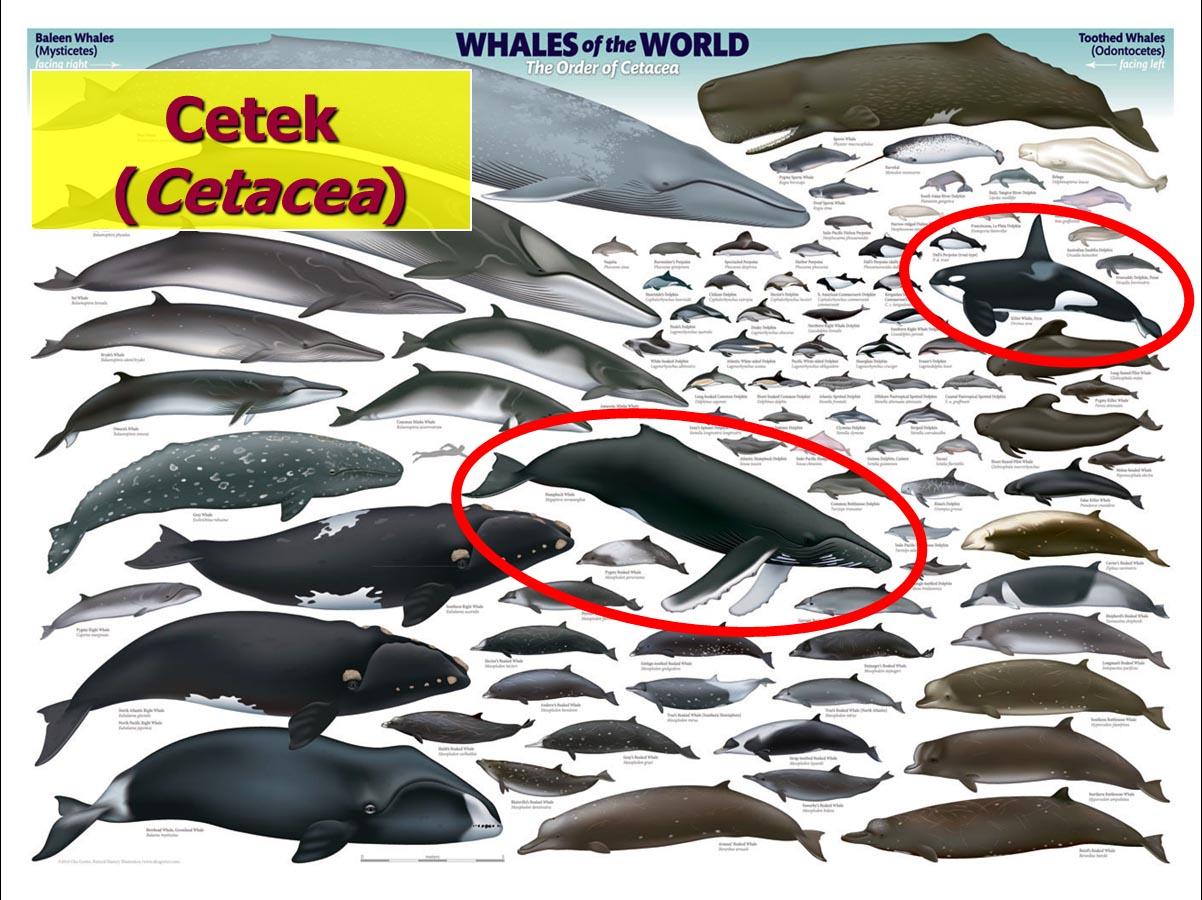 A bálna tabletták ára - rebus.hu
